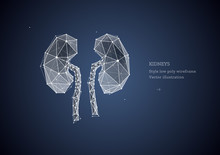 Kidney. Low Poly Wireframe Style. Poster Concept, The Treatment Of Urological Diseases. Organ Transplantation. Abstract Illustration Isolated On Blue Dark Background.