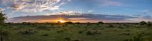 Sunrise Over A Texan Cactus Fi...