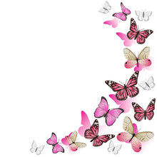 Frame Of Pink Butterflies In F...