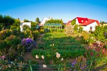 Communal Garden In Poland, Wid...