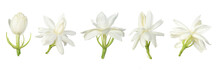 Set Of White Flower, Thai Jasmine Flower  Isolated On White Background.