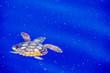 canvas print picture - sea turtle in micro plastic sea