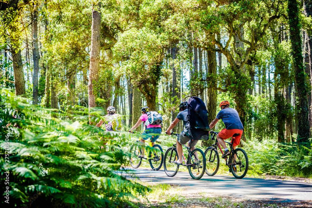Fototapety, obrazy: groupes de cyclistes dans la forêt des Landes