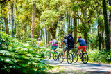 groupes de cyclistes dans la forêt des Landes - 275218506