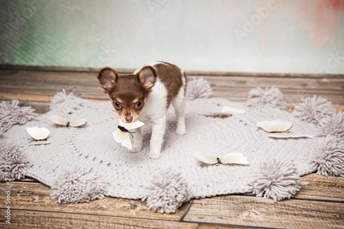 Foto op Canvas Hert Hund ist versichert