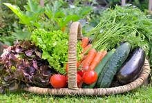 Basket Full Of Fresh Vegetables In Front Of A Vegatable Garden