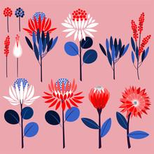 Geometric Of Protea Flowers An...