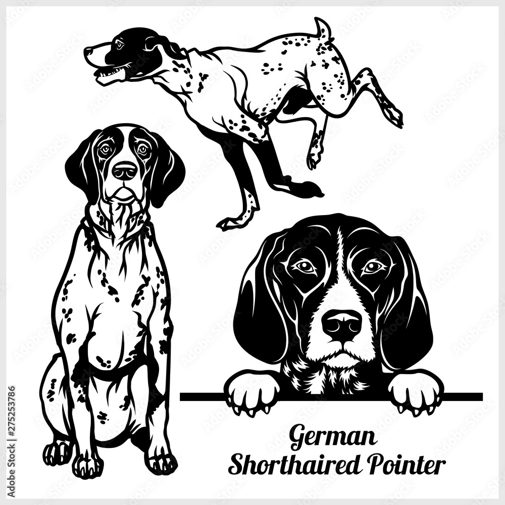 Fototapeta German Shorthaired Pointer - vector illustration for t-shirt, logo and template badges