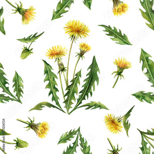 Watercolor vector seamless pattern with dandelion flowers and leaves isolated on white background.