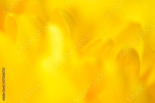 Recess Fitting Buddha yellow flowers close up