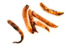 Six Rotten, Dry, Dead Carrots Isolated On White Background