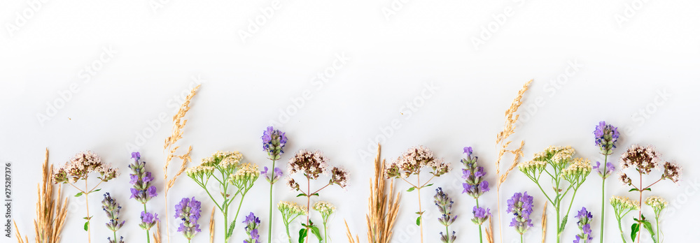 Fototapety, obrazy: Alternative medicine. Medicinal herbs lavender, oregano, sage, yarrow on a white background. Top view, copy space, banner.
