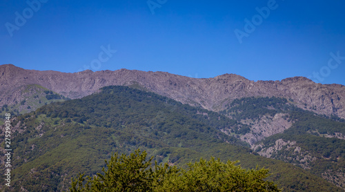 Mountain landscape with treetop on the foreground