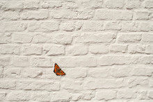 Butterfly On White Brickwall
