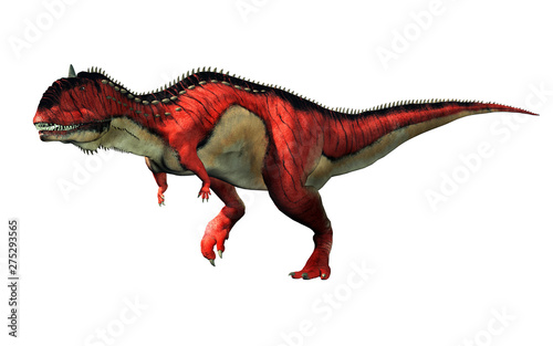 Fototapeta  A red and white Rajasaurus with black stripes on a white background