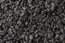 Black Sunflower Seeds. Black Sunflower Seeds For Texture Or Background. Black Sunflower Seeds Macro Close Up