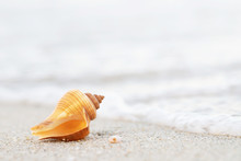 Beautiful Sea Shell On Sand With Wave Of On The Beach Over Seascape In The Under Sunset Sun Light.