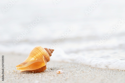 Fototapeta beautiful sea shell on sand with wave of on the beach over seascape in the under sunset sun light