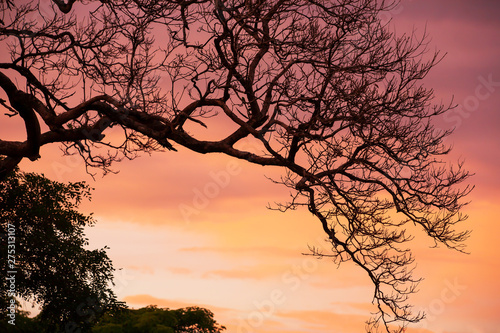 Poster Taupe Art of bare branches of tree against dramatic sunset sky.