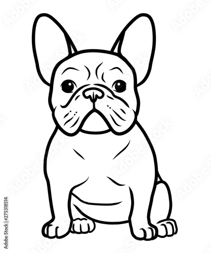 Obraz French bulldog black and white hand drawn cartoon portrait vector illustration. Funny french bulldog puppy sitting and looking forward. Dogs, pets themed design element, icon, logo, coloring book page - fototapety do salonu