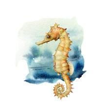 Watercolor Seahorse. Underwate...