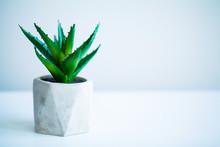 Spa Concept. Aloe Vera Plant O...
