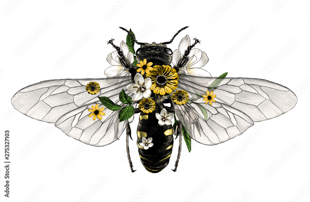 Fototapety, obrazy: bee with open wings top view decorated with flowers and leaves symmetrically, sketch vector graphic style color illustration on white background