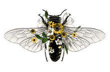 Bee With Open Wings Top View D...