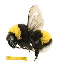 Bumblebee. 3d Realistic Vector...