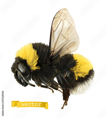 Bumblebee. 3d realistic vector icon Fototapet