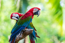 Group Of Colorful Macaw On Tre...