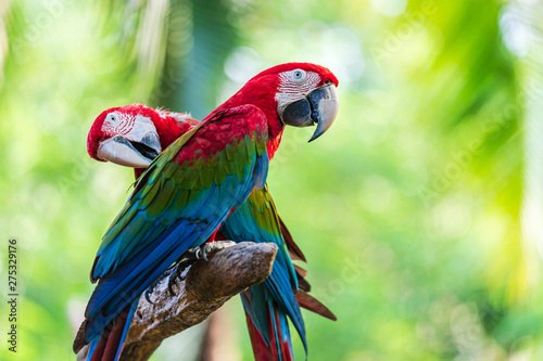 Tuinposter Papegaai Group of colorful macaw on tree branches