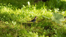 Little Bird In The Grass On Th...