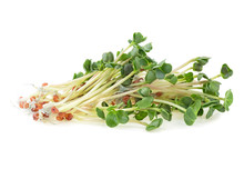 Young Sprout Microgreen Isolated On A White Background. Micro Baby Leaf Vegetable Of Green Radish Seeds Sprouts.