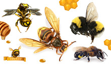 Bee, Bumblebee, Wasp, Hornet. 3d Realistic Vector Icon Set