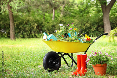 Fényképezés Wheelbarrow with gardening tools and flowers on grass outside