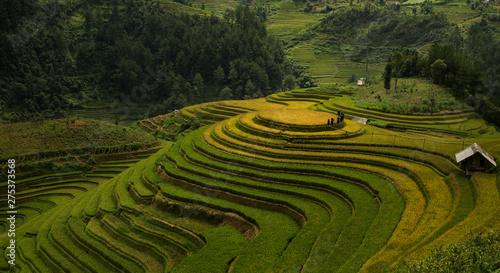 Garden Poster Rice fields Mucangchai Vietnam
