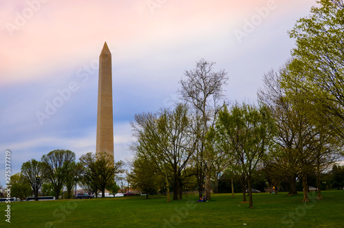Cherry Blossom and Washington Monument , USA
