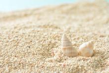 貝殻 サンゴの砂