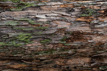 Closeup Texture Of Tree Bark. ...