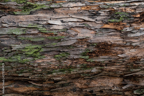 Closeup texture of tree bark Canvas Print
