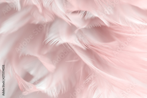 Fotomural Blur Bird chickens feather texture for background, Fantasy, Abstract, soft color of art design