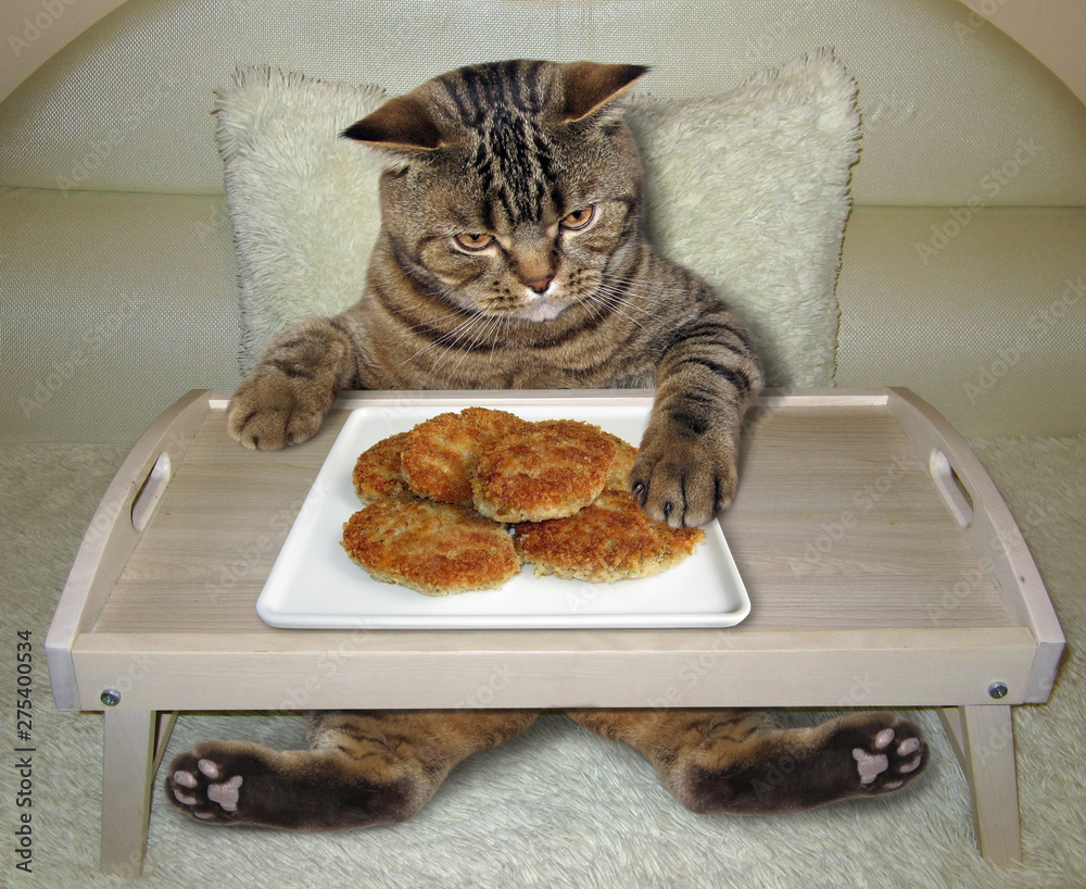 Fototapety, obrazy: The cat is eating fried cutlets from the folding wooden bed tray at the hotel.