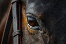 Eye Of A Beautiful Horse On Dark Background Close Up