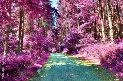 Keuken foto achterwand Kersenbloesem Beautiful infrared view into a purple fantasy forest