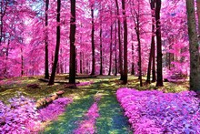 Beautiful Infrared View Into A Purple Fantasy Forest