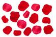 canvas print picture - Rote Rosenblätter Freisteller