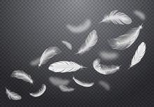 White Falling Feathers Transpa...