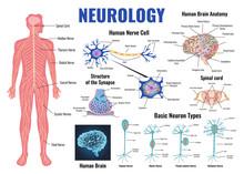 Neurology And Human Brain Set