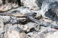 Bonfire Extinguished In Riverb...